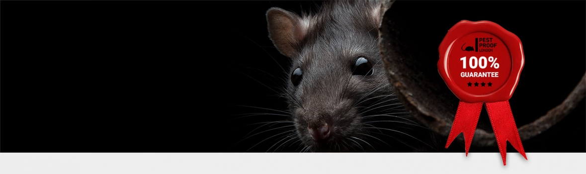 Rat Control and Pest Proofing, London