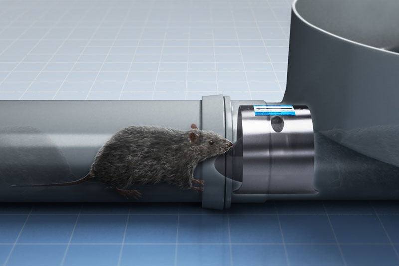 The innovation and development of the rat valve